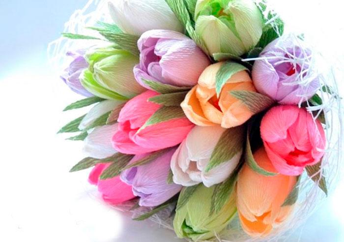rafaello tulipán