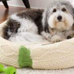 Kényelmes fekhely kutyának, cicának