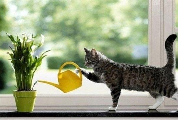 legjobb légtisztító növény